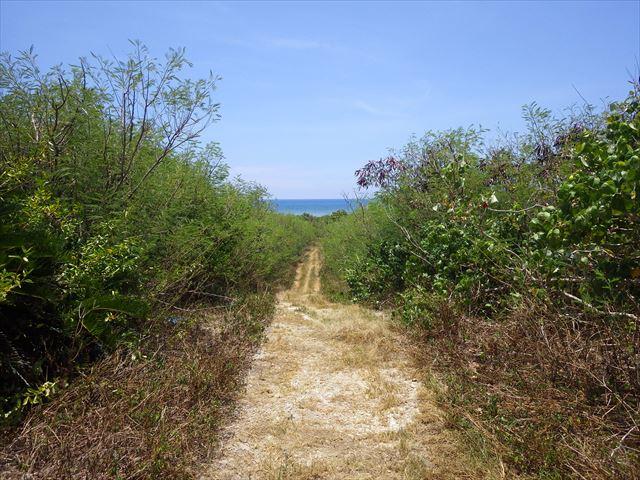 珊瑚の浜への道