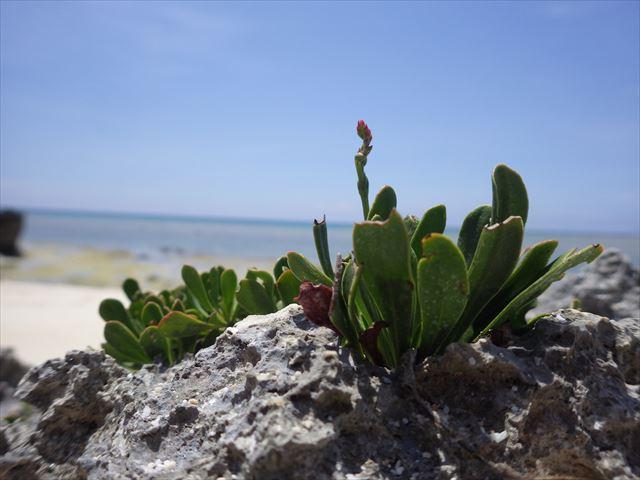 かわいい植物